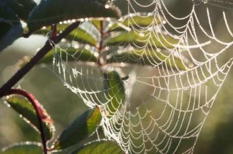Spinnen-Kunstwerk